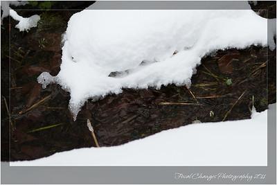 2012_01_18_SnowStorm-3042