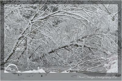 2012_01_18_SnowStorm-3021