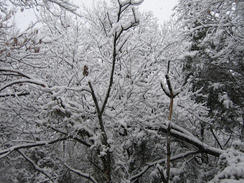 "<a href=""http://xenogere.com/the-snow-episode-i/"" title=""The Snow: Episode I"">Blog entry</a>"