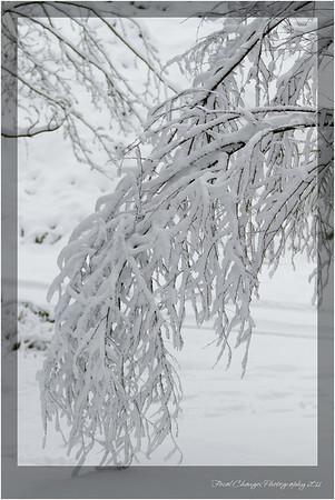 2012_01_18_SnowStorm-3007