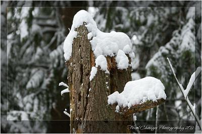 2012_01_18_SnowStorm-3085