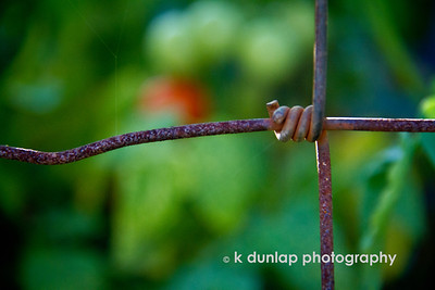 "11.13.12. = Fences  ""Don't ever take a fence down until you know why it was put up.""  Robert Frost"