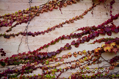 "11.06.13 = Obsession  I know, I know, I'm obsessed with these vines and this wall, but the colors, textures and the sheer amazement of it, has it's hold on me.    ""Color is my day-long obsession, joy and torment.""  Claude Monet"