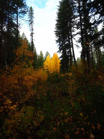 Wenatchee Canyon, 10-16