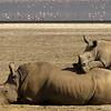 White rhinoceros mother and calf.  Lake Nakuru, Kenya.