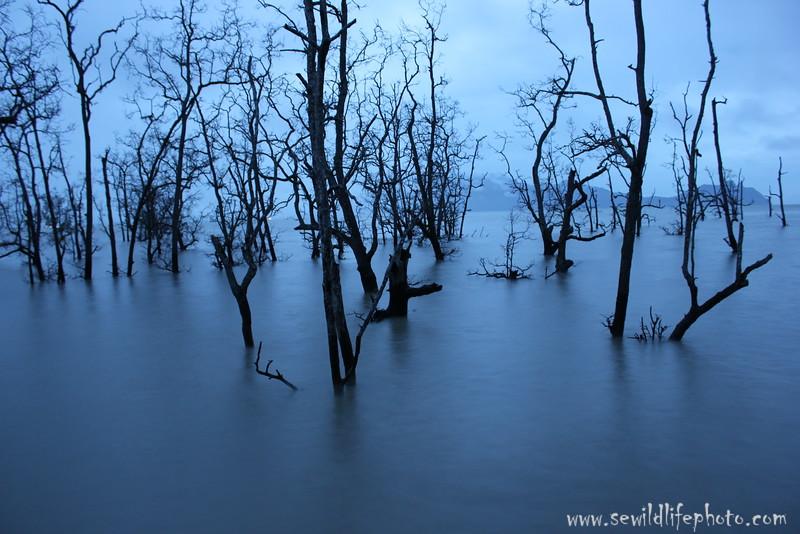 Sunken forest. Bako National Park, Borneo, Malaysia.