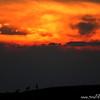 Argali sunset.   Ikh Nart Nature Reserve, Mongolia.