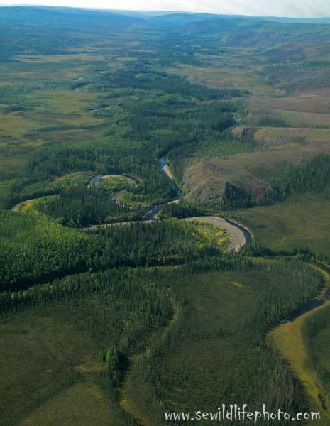 Birch Creek.  White Mountains, AK.