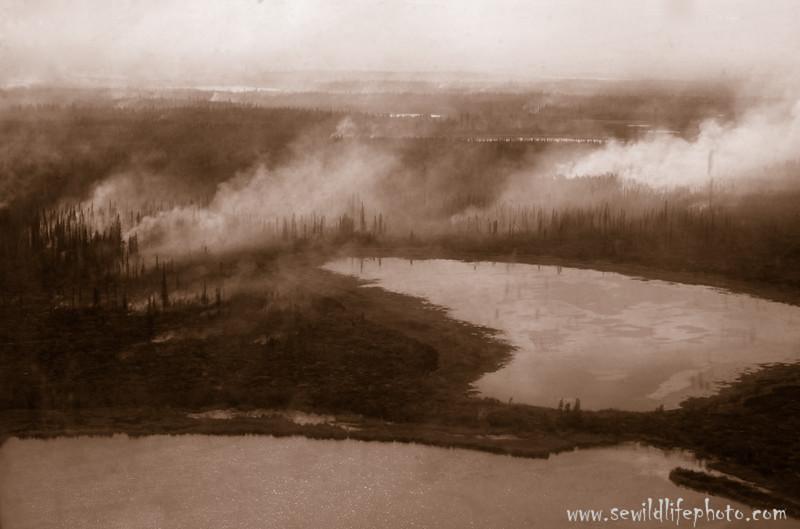 Forest Fire. Yukon Flats National Wildlife Refuge, AK.