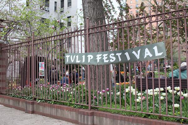 West Side Community Garden Tulip Festival - April 29, 2018