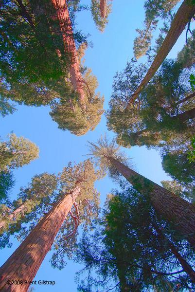 Nelder Grove of Giant Sequoias