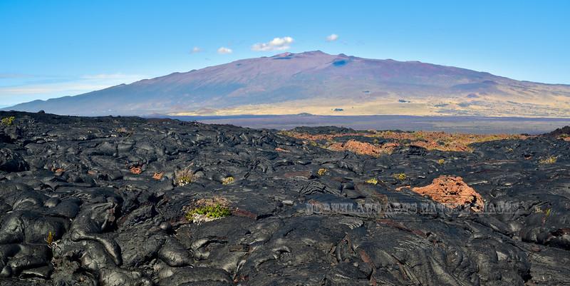 HI-2015.2.2#117. Mauna Kea as seen from a lava flow half way up the slopes of Mauna Loa on the Big Island Hawai'i.