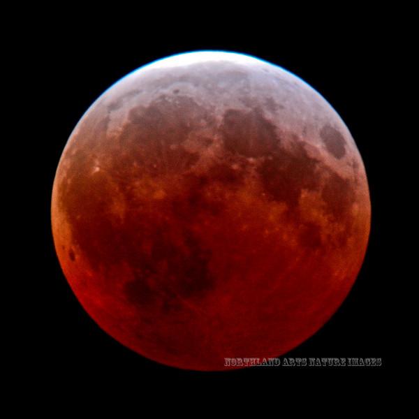 "AK-2015.4.4#028. The ""Blood Moon"" Lunar Eclipse. Viewed from Anchorage Alaska."