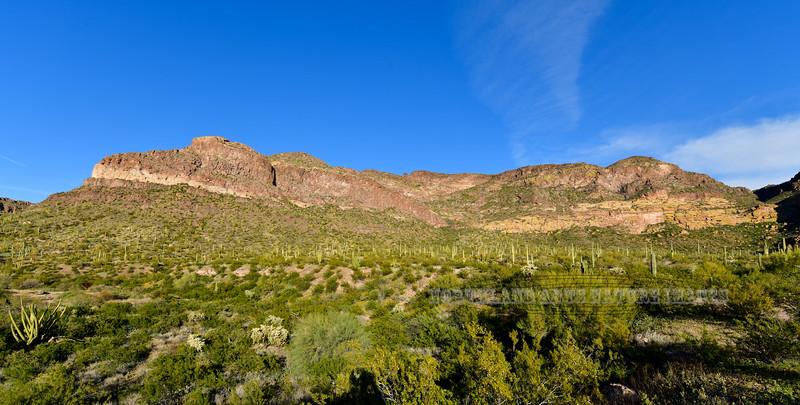 AZ-OPCNM2019.3.5#011. West facing front range of the Ajo Mountains. Organ Pipe Cactus Monument, Arizona.