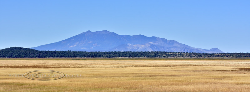 AZ-2019.10.2#388.4. The San Francisco Peaks behind Mormon Lake Arizona.
