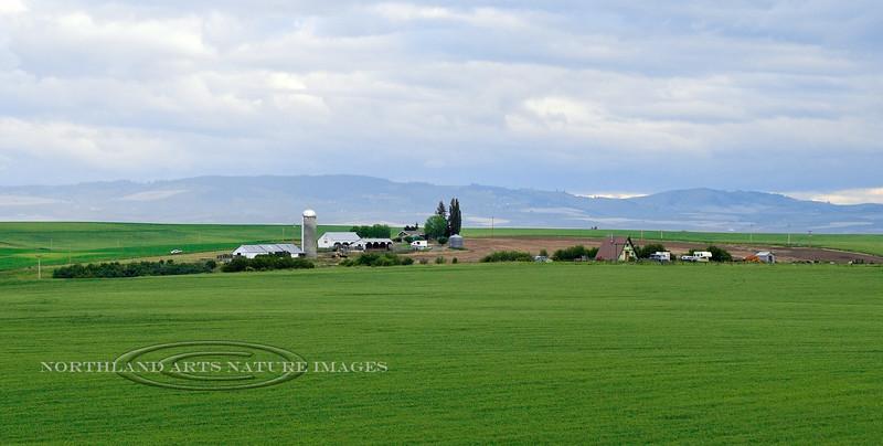 ID-2012.6.18#033-Camas Prairie farms near Grangeville, Idaho.