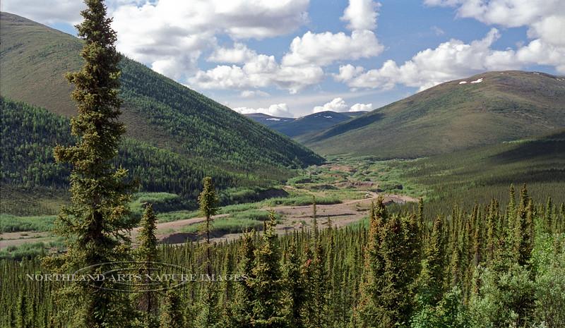 AK-Shw2000.6.21#3. Looking up Mastodon Creek from the Steese Highway Alaska.