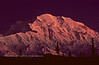 AK-DNP-1984.9#8.3x. Mourning Alpenglow on Denali vied from the Wonder Lake campground. Denali Park Alaska.