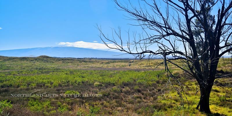 HI-2015.2.2#079. A view of Mauna Loa from the Saddle Road. The Big Island Hawai'i.