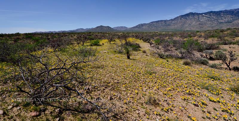 AZ-2018.4.12#1010. Desertscape of Poppy's. RT191, Pinaleno Mountains, Graham County Arizona.