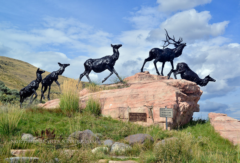 WY-2017.9.14#1417.3. Elk Sculptures  at the entrance of the National Museum of Wildlife Art. Jackson Hole , Wyoming.