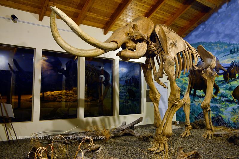 ID-2014.5.14#137.2. The Tolo Lake Columbian Mammoth. Exhibit Pavilion in Grangeville Idaho.