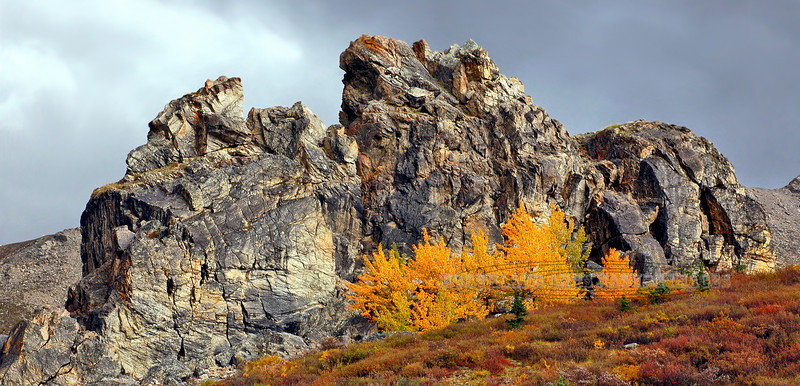 AK-DNP-2007.9.1#098. A dramatic view of Savage Rock at the peak moment of the best fall color I was ever able to capture of this subject. Denali Park, Alaska.