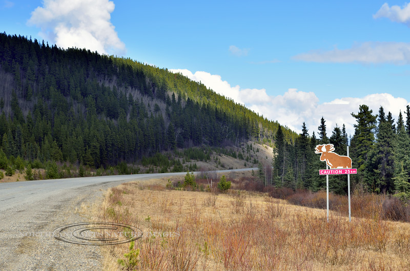 CANYK-2017.5.15#111.1. A Canadian Moose crossing sign. East of Swift River on the Alaskan Highway. Yukon Territory Canada.