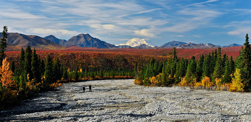 AK-DNP-2009.9.4#172. A great showing of Denali behind fabulous fall color. The view down a wash near eleven mile in Denali Nat. Park Alaska.