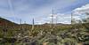AZ-SWNP-2019.3.20#004. Saguaro desertscape. Saguaro West Park Arizona.