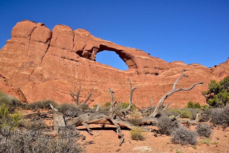 UT-ANP2017.10.6-Skyline Arch close up. Arches Nat. Park Utah. #270.