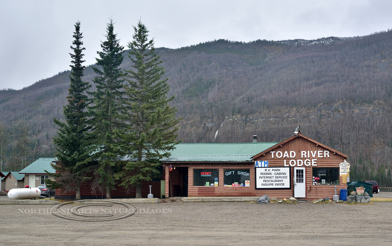 CANBC-2017.5.16#179.2. The famous historic Toad River Lodge on the Alaskan Highway. British Columbia Canada.
