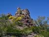 AZ-PPSP2019.3.14#017. Desertscape of Brittlebush on an outcrop. Picacho Peak State Park, Arizona.