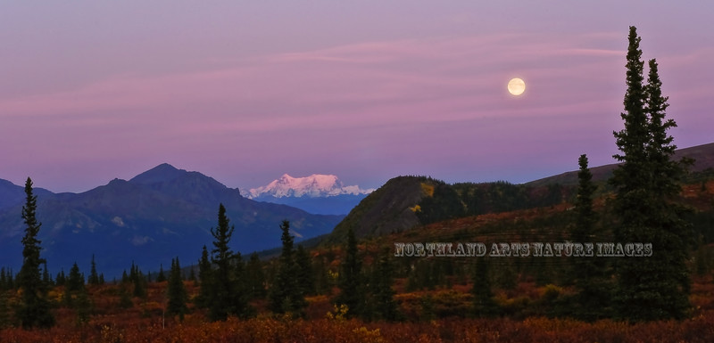 "AK-DNP-2009.9.4#001. A full September ""Harvest Moon"" rises in early evening over the Denali Country. View from near seven mile in Denali Nat. Park Alaska."