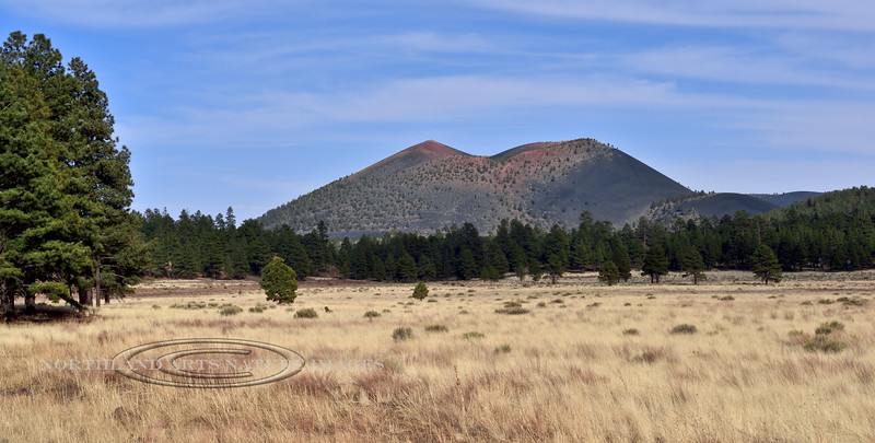 AZ-WSC2018.4.26#115. View of Sunset Crater Volcano from Bonito Meadow. Sunset Crater Volcano Monument Arizona.