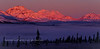 "AK-DNP-2011.5.3#282. Dramatic mourning ""alpenglow"" on Denali. View from the Savage River country, Denali Nat. Park Alaska. Alpenglow is an optical phenomenon of the horizontal purpley red glow on mountains or low clouds opposite the sun when the solar disk is still below the horizon."