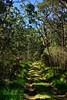HI-2015.2.3#168. Hakalau Forest Preserve, Mauna Kea Hawai'i.