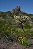 AZ-PPSP-Desertscape 2019.3.14#013. Picacho Peak State Park, Arizona.