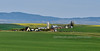 ID-Camas Prairie farm. near Grangeville, Idaho. #513.039. 1x2 ratio format.
