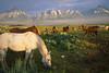 Teton Horses
