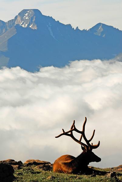 Elk with Altitude
