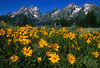 Tetons & Wildflowers  245