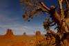 Mittens & Tree
