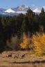 Elk, Aspens & Longs  234