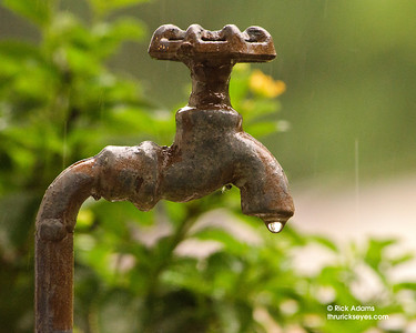 A decorative water spigot sheltering a tiny creature.