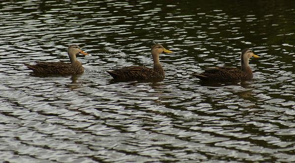 wetlands  10 14 2012