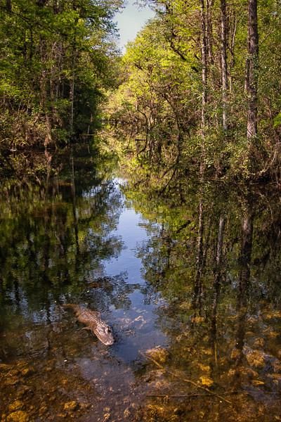 Wetlands--29