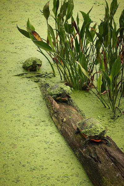 Wetlands-1115