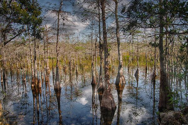 Wetlands--22