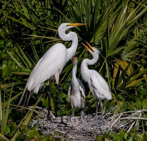 Wetlands-5757